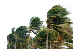 Palm trees in a windy tropical storm