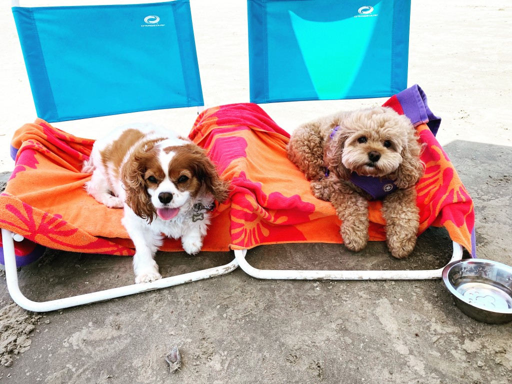 Dogs on Beach Chairs